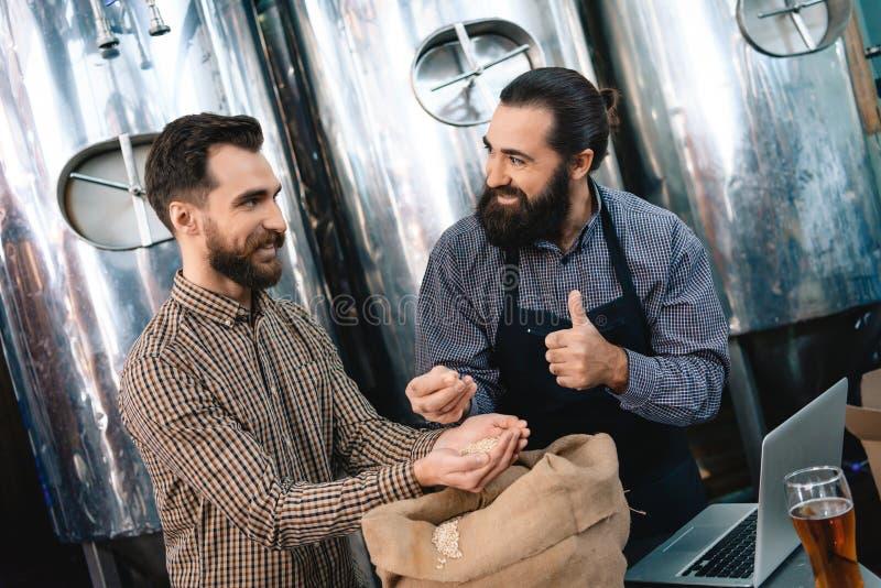 Due uomini barbuti adulti controllano la qualità di malto d'orzo mentre in fabbrica di birra Processo di fabbricazione della birr immagine stock libera da diritti