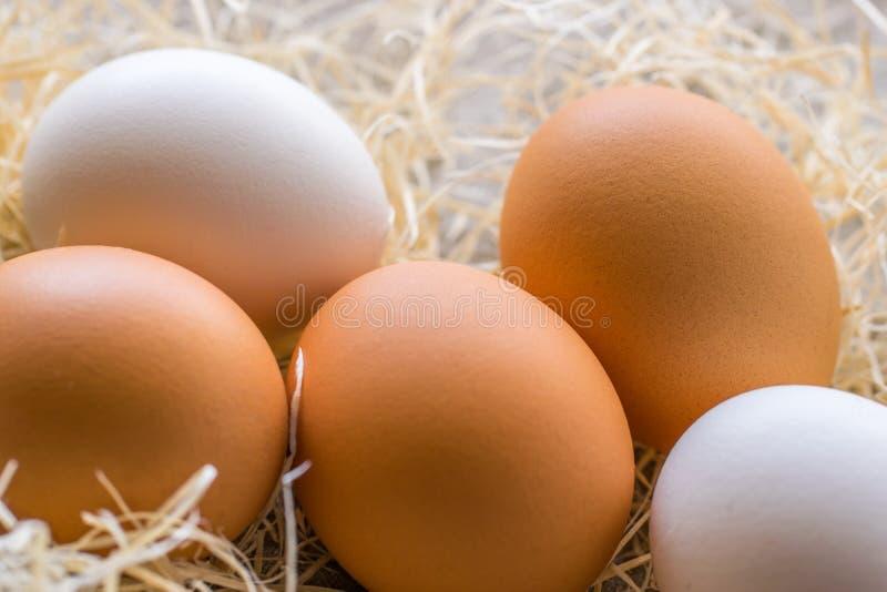 Due uova bianche e tre marroni sui precedenti di fieno fotografie stock libere da diritti