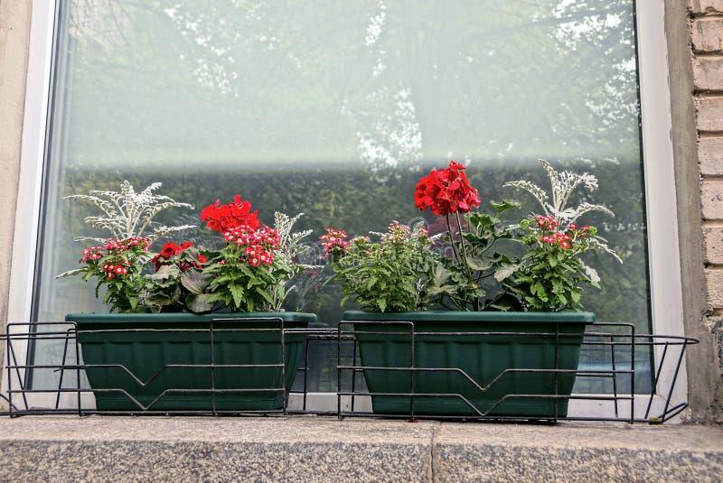 Due vasi da fiori verdi con i fiori sul davanzale della finestra vicino alla finestra immagine - Fiori da finestra ...