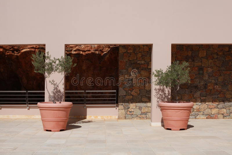 Due vasi di terracotta con di olivo sul terrazzo di for Vasi terracotta prezzi