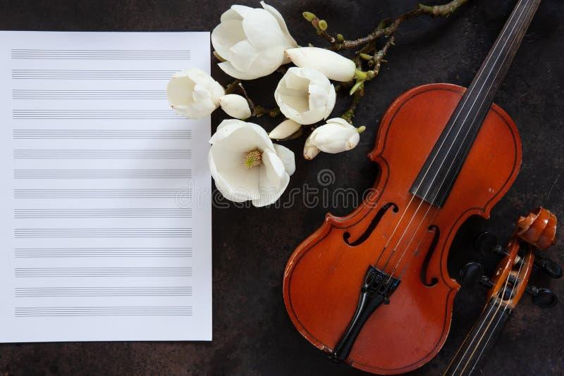 Due vecchi violini e brances sboccianti della magnolia sulla carta per appunti bianca Vista superiore, primo piano fotografie stock