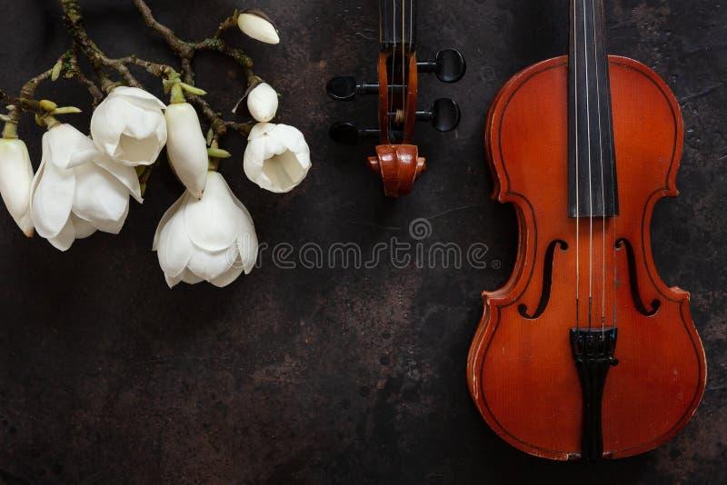 Due vecchi violini e brances sboccianti della magnolia Vista superiore, primo piano su fondo d'annata scuro fotografie stock libere da diritti