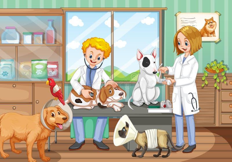 Due veterinari che lavorano nell'ospedale animale illustrazione di stock