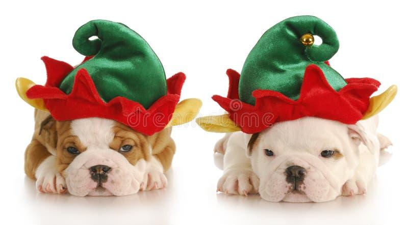 Duende de la Navidad foto de archivo