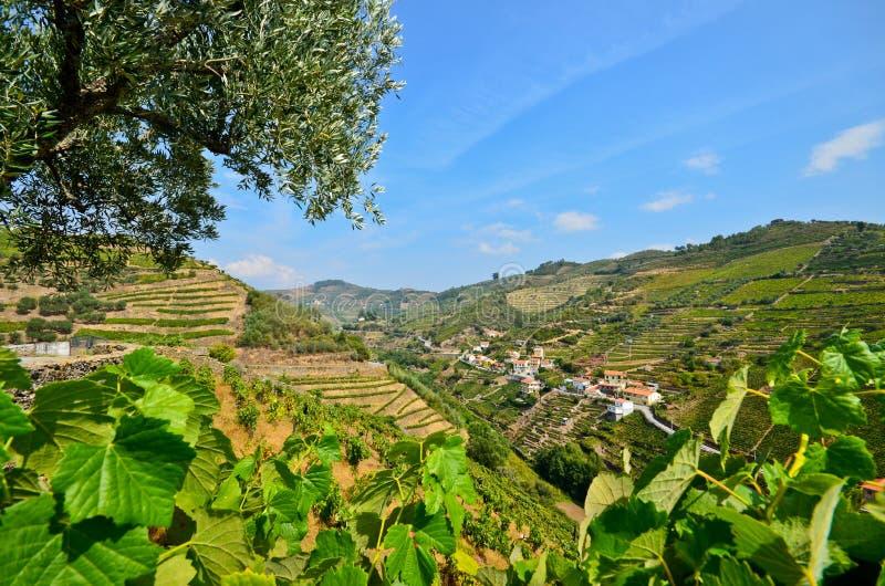 Duero-Tal: Weinberge und kleines Dorf nahe Peso DA Regua, Portugal lizenzfreie stockfotografie