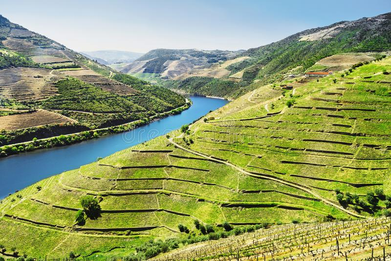 Duero-Tal Weinberge und Landschaft nahe Pinhao-Stadt, Portugal stockbilder