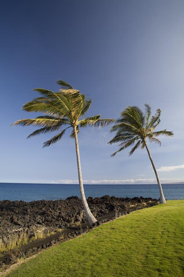 duett hawaii gömma i handflatan royaltyfria bilder