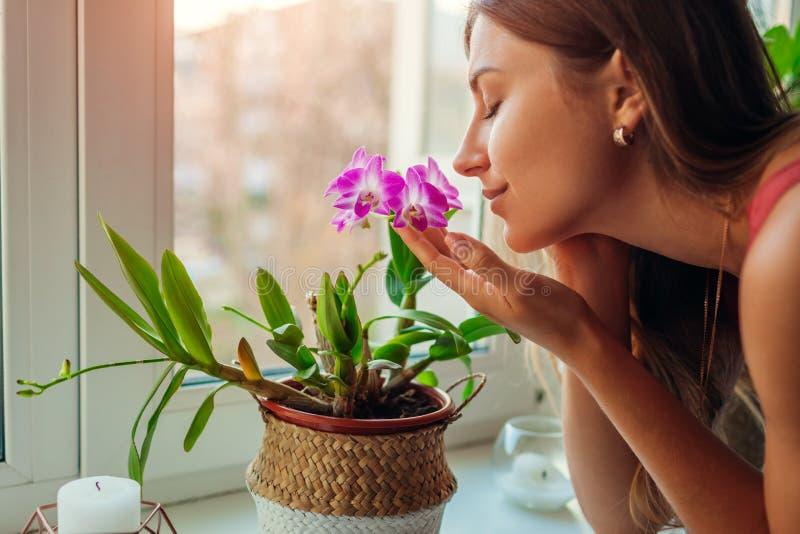 Duft von Dendrobium-Orchideen auf Fensterbank Hausfrau kümmert sich um Hauspflanzen und Blumen lizenzfreies stockbild