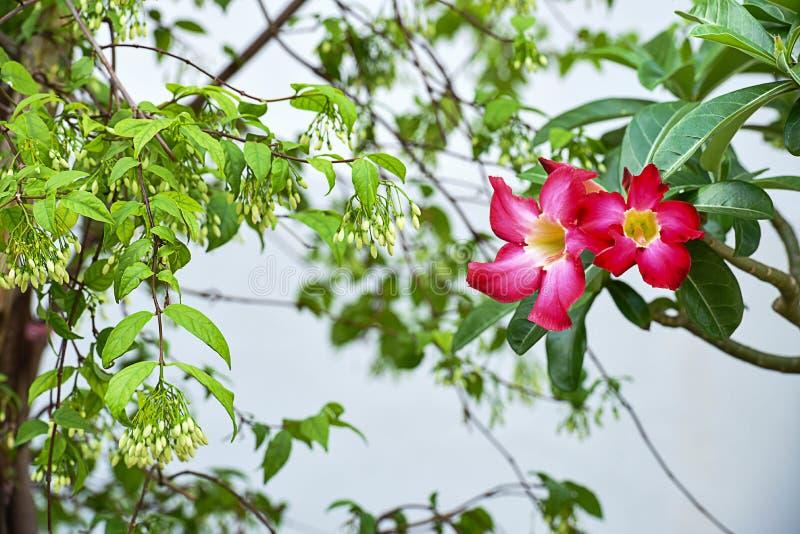 Duftende Und Nicht- Duftende Blumen Stockbild - Bild von blühen ...