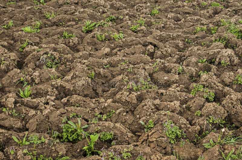 Dug out soil. For spring planting of vegetables as rural background stock photography