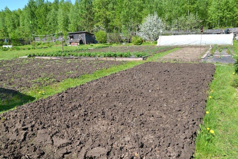 The dug-up kitchen garden on the seasonal dacha.  stock photos
