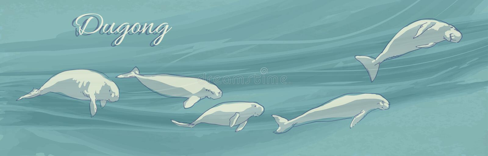 Dugongs underwater swimming. Vector illustration of sea cows on ocean current background. Hand drawn marine animals. Dugongs underwater swimming. Vector vector illustration