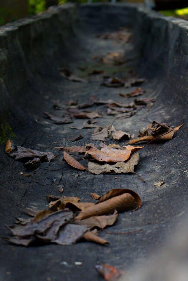 Dugout Kano met Bladeren stock afbeeldingen