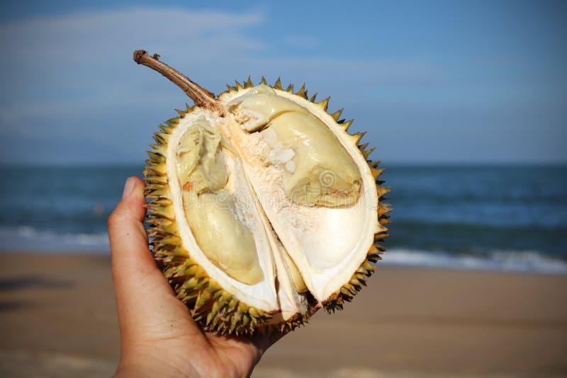 Download Duian Frukt Halverade Handholdingen På Stranden I Th Arkivfoto - Bild av ripen, tropiskt: 27275628