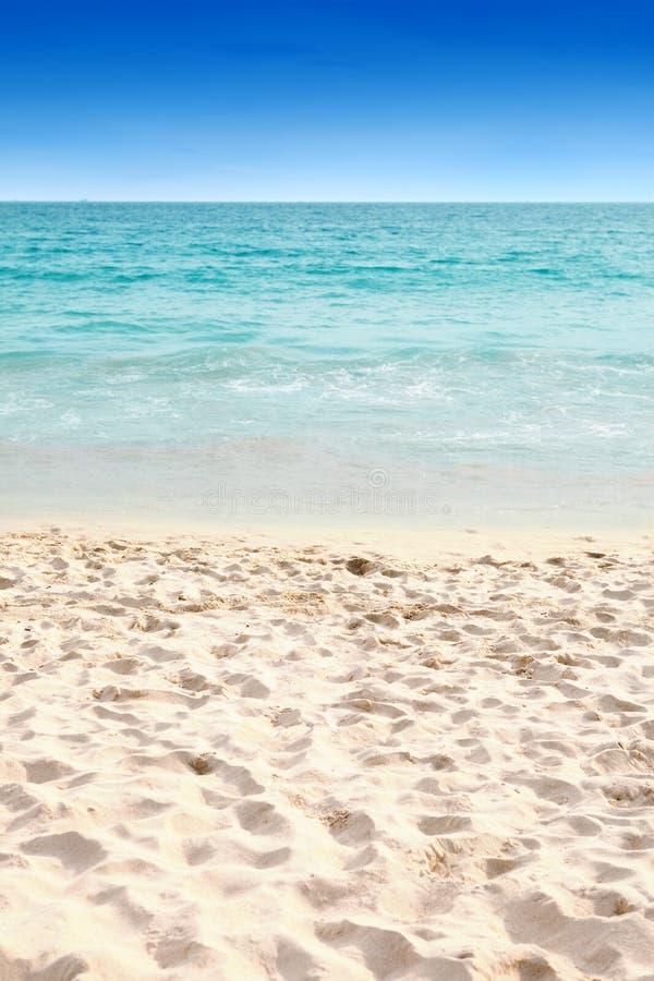 Duidelijk blauw water en zacht zandig strand stock afbeeldingen