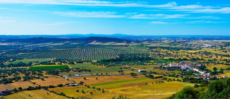 Duidelijk Landschap - Olive Trees Plantation - Alentejo, Reis Portugal stock foto's