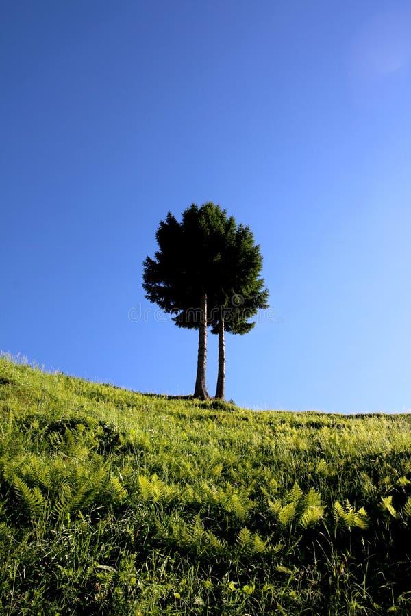 Duidelijke blauwe hemel en tweelingboom op een heuvel met groen gras royalty-vrije stock afbeelding