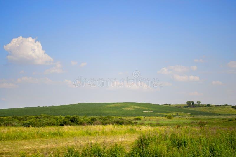 Duidelijke blauwe hemel met kleine witte wolken en groen gebied in de zomer stock afbeelding