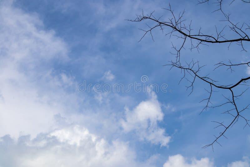 Duidelijke blauwe hemel met witte wolkenmening door droge boom stock foto's