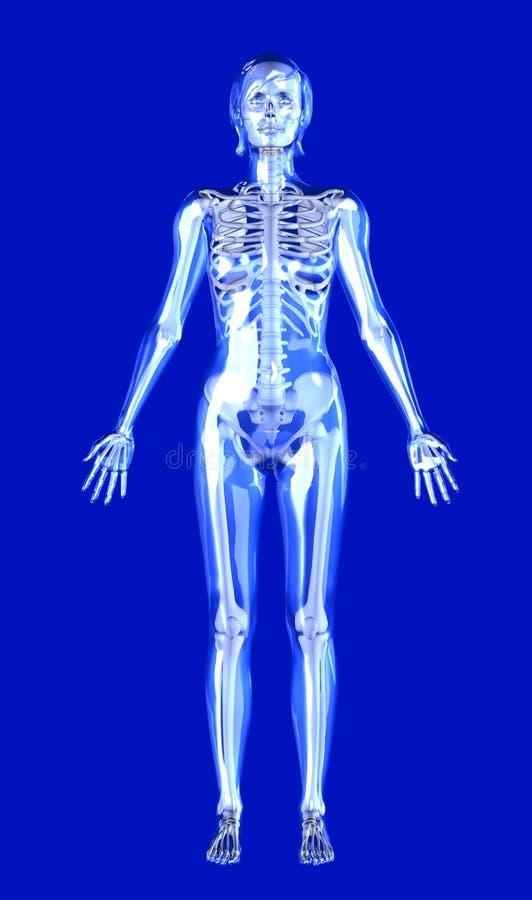 Duidelijke Blauwe Vrouw met Skelet - omvat het knippen weg stock illustratie