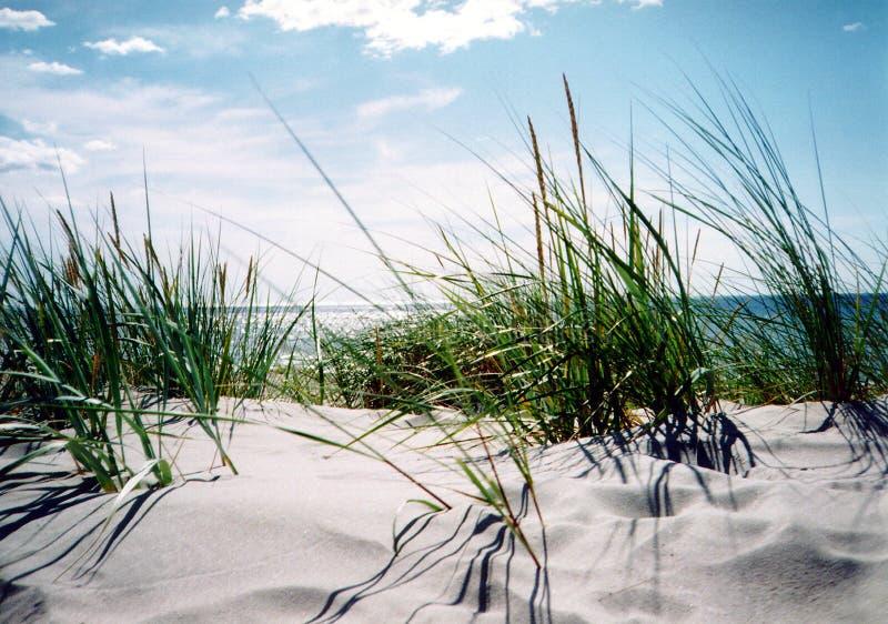 Duidelijke de zomerdag door de kust stock foto's