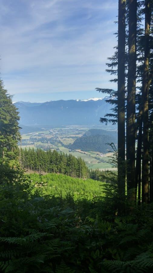 Duidelijke heropleving van het Canadese bos royalty-vrije stock foto