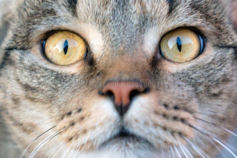 Duidelijke ogen van een gezonde kat stock afbeeldingen