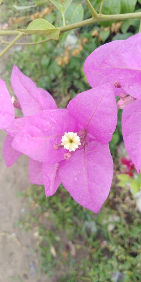 Duidelijkheid voor roze bloem royalty-vrije stock afbeelding