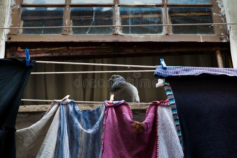 Duif bij het venster stock foto
