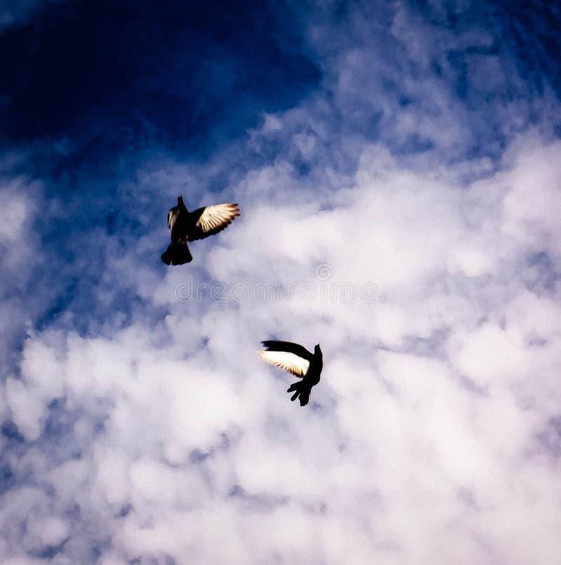 Duif in de hemel met wolken stock foto
