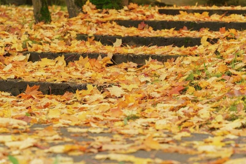 Duif die op gras dichtbij lariksboom lopen royalty-vrije stock afbeelding