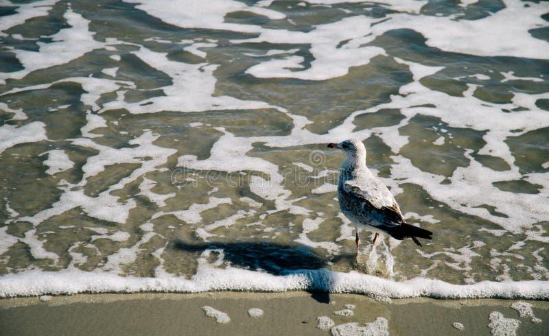Duif en zijn strand royalty-vrije stock afbeelding