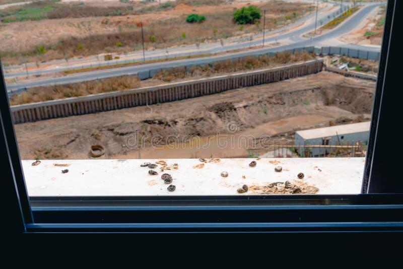 Duif het dalen op de vensterbank stock fotografie
