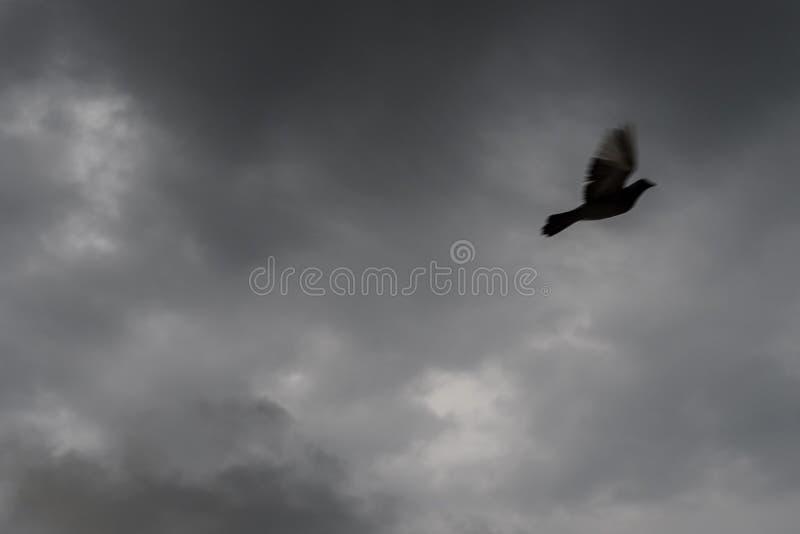 Duif met donkere wolken royalty-vrije stock foto's