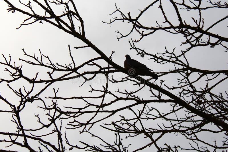 Duif op een boom royalty-vrije stock afbeeldingen
