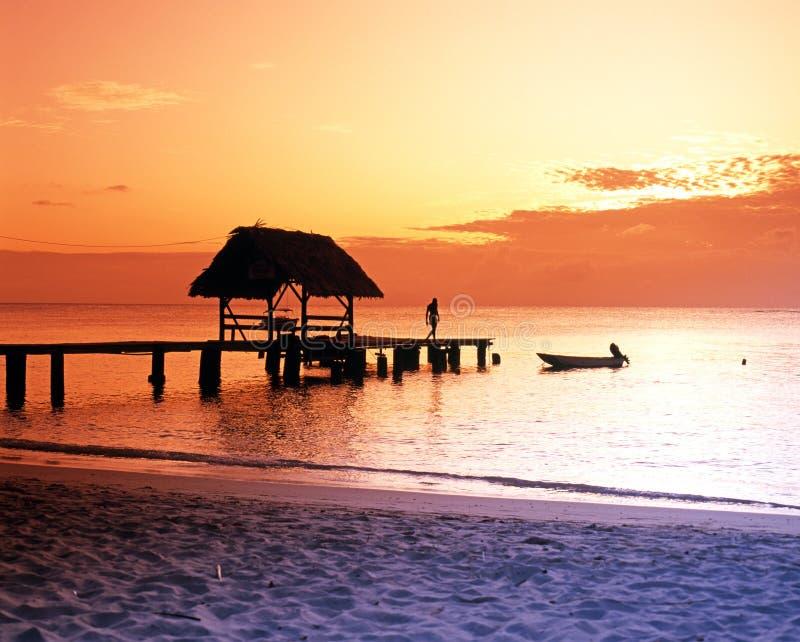 Duifpunt bij zonsondergang stock foto