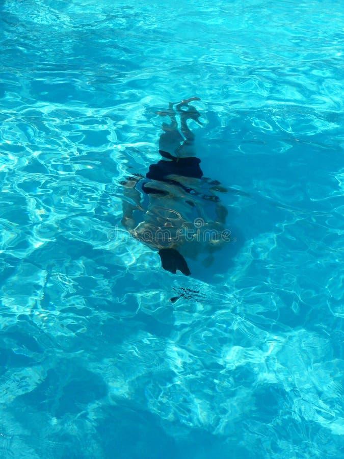 duiker royalty-vrije stock fotografie