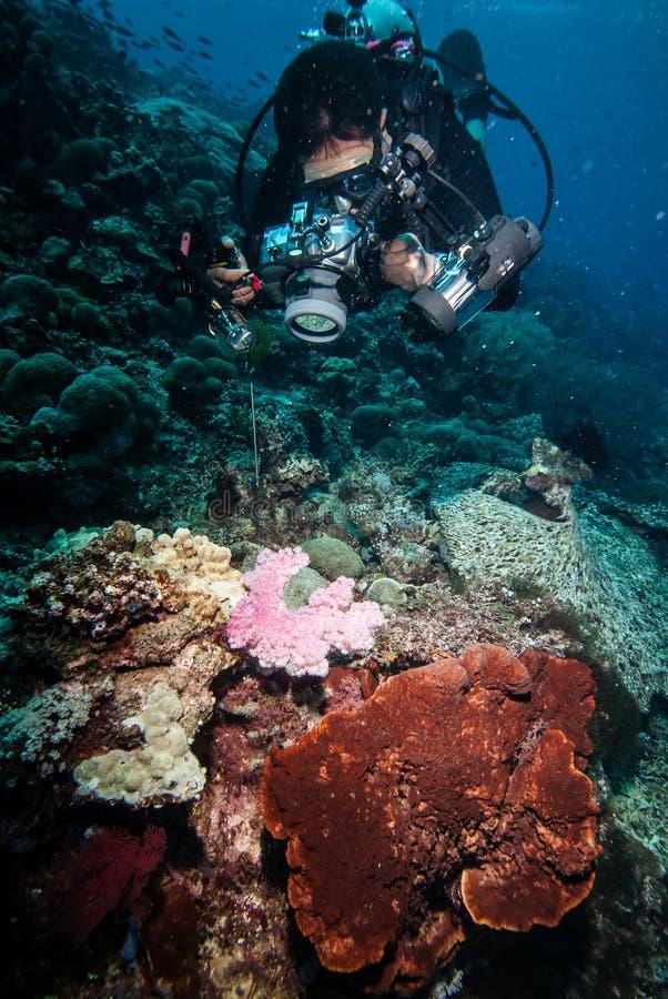 Duiker die beeld van koraalriffen in Derawan, Kalimantan, de onderwaterfoto van Indonesië nemen royalty-vrije stock afbeeldingen
