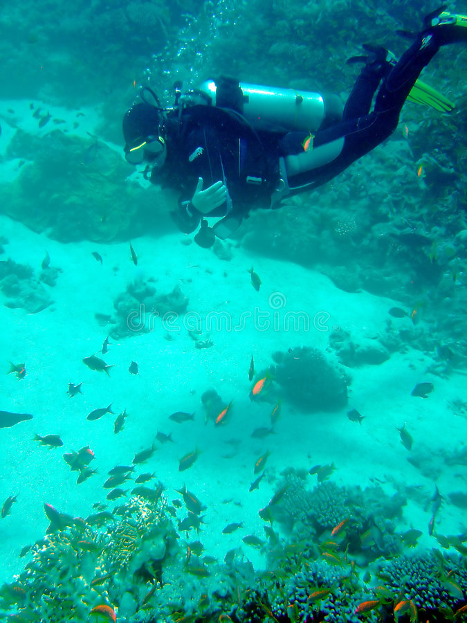 Duiker met koralen en vissen royalty-vrije stock foto's
