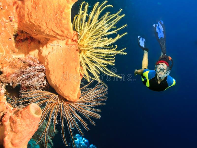 Duiker onderwater stock foto