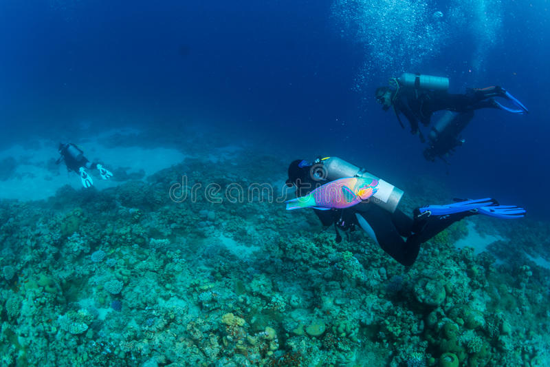 Duiker op reaf royalty-vrije stock foto