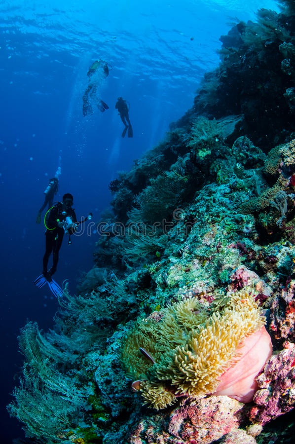 Duikers, anemoon, clownfish, zacht koraal in Banda, de onderwaterfoto van Indonesië royalty-vrije stock fotografie