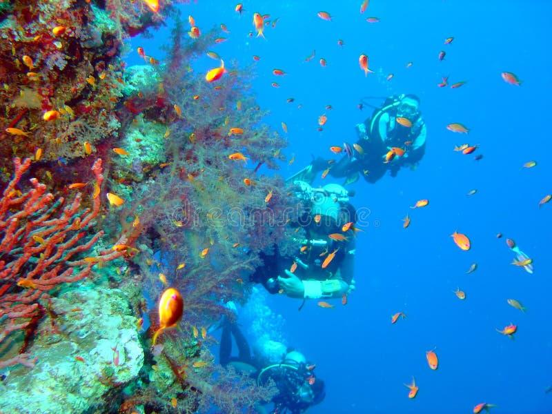 Duikers en koraal royalty-vrije stock foto