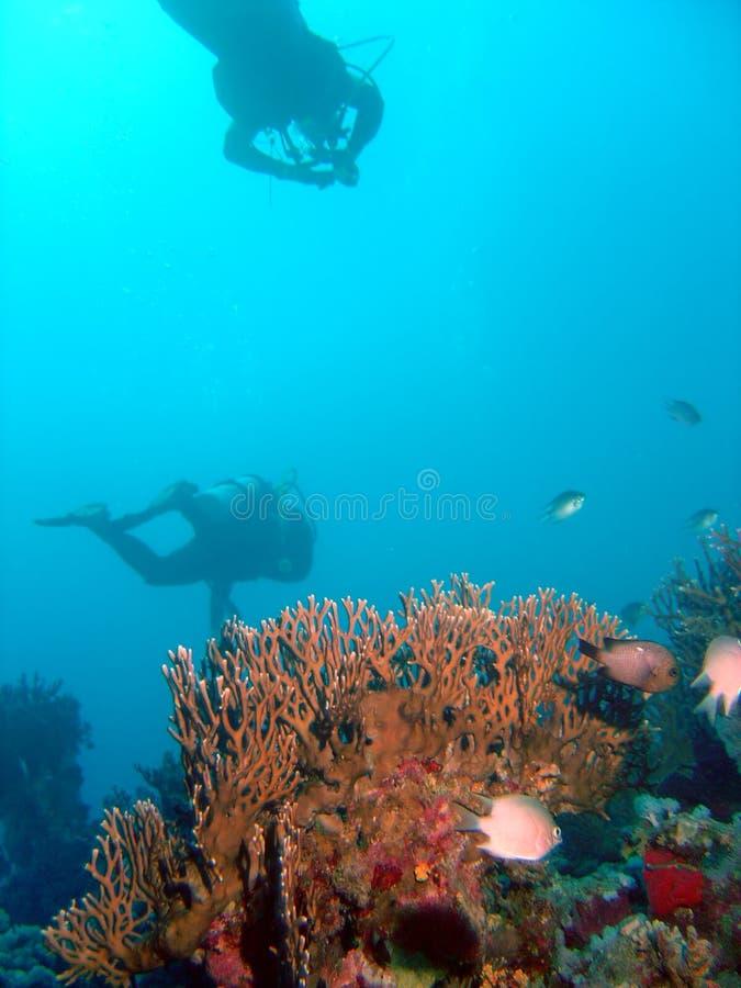 Duikers over koralen stock foto's