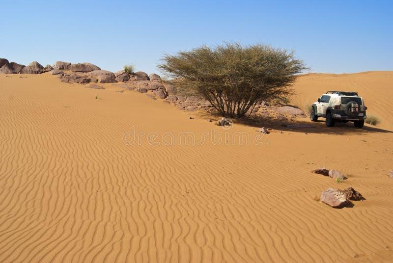 Duin het berijden in Arabische woestijn royalty-vrije stock afbeeldingen