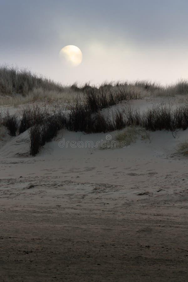 Duin met overzeese mist op Langeoog stock foto's