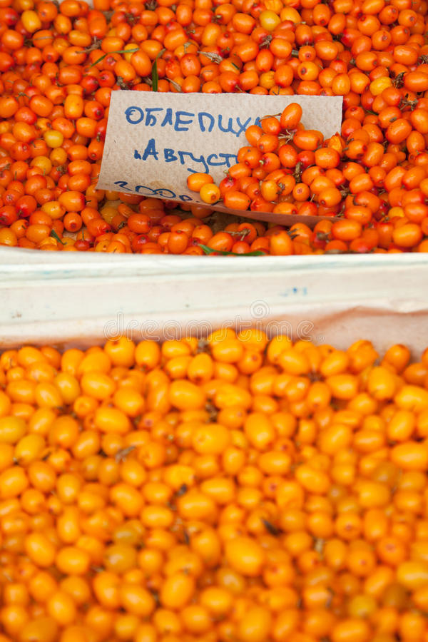 Duindoorn stock foto
