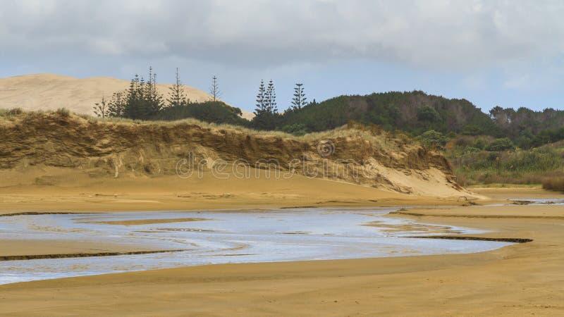 Duinen, bomen, en kreek: Negentig Mijlstrand, Nieuw Zeeland stock afbeeldingen