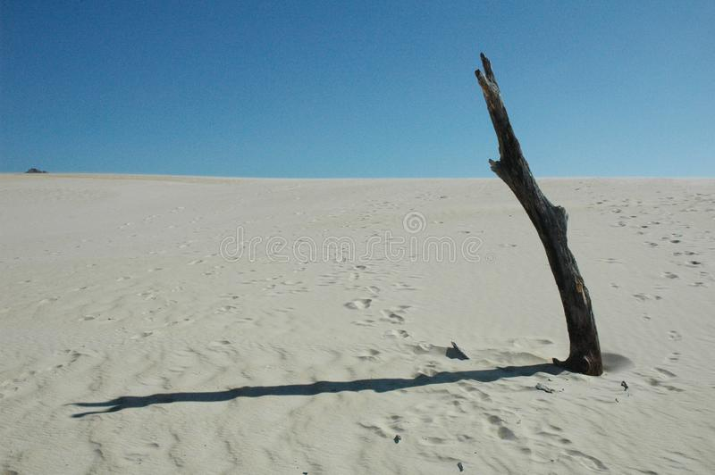 Duinen in Fraser Island, Australië royalty-vrije stock foto