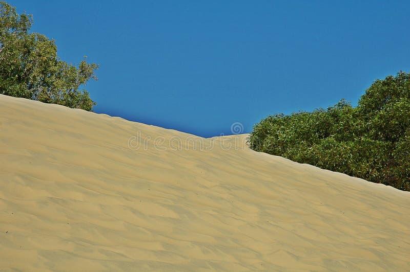 Duinen in Fraser Island, Australië stock afbeelding